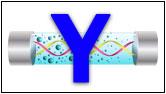 Тестирование Y-хромосомы